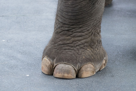power giant: Big elephant leg and toe on cement roadElephant leg elephant