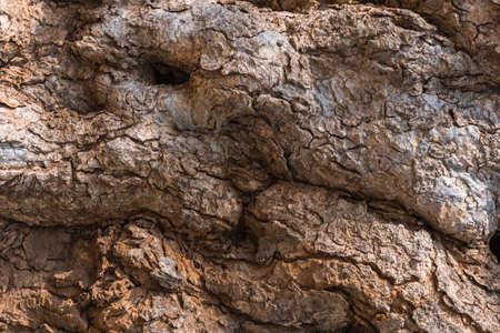 weatherworn: Texture of the bark old tree.