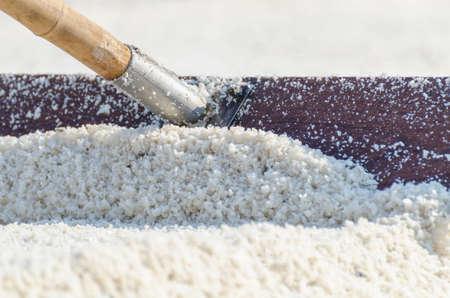equalize: Harrow drag sea salt in harvest process at salt field in Samut Songkhram province, Thailand.