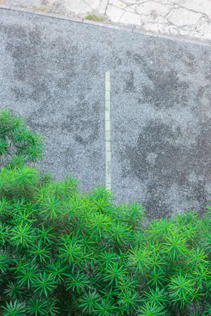 tree service business: Top view of parking area with garden.