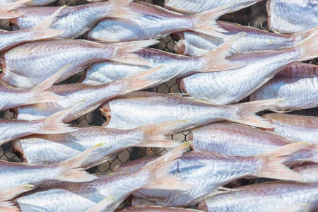 sieve: Threadfin fish dry out on sieve. Stock Photo
