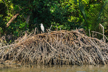 intermediate: Intermediate egret on the wood heap at riverside, in Thailand. Selective Focus. Stock Photo