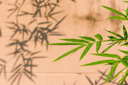Abstract Background, the bamboo leaves against shadow lie on the wall. Selective Focus.