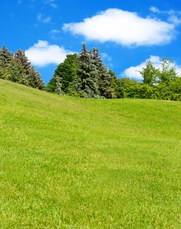 Meadow of fresh grass and trees in background. photo