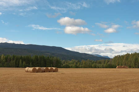 Field with bales. Stock Photo - 15936232