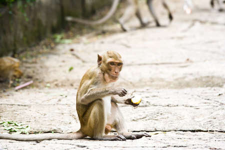 A careful look at the monkeys eating fruit  photo
