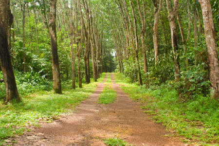 forest road: Road natural existence and use of the home.