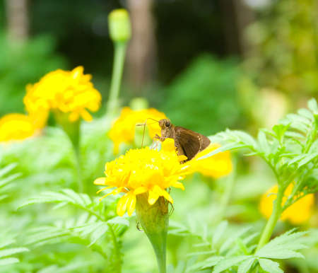 Butterfly sucking nectar from flowers with butterflies, spiders waiting to be dealt with  Stock Photo - 16022607