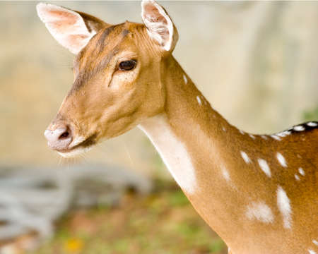 poor eyesight: Wait a couple deer with poor eyesight