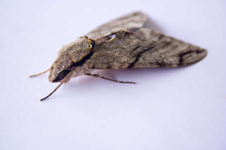 nocturnal: Moth black eyes and quiet during the day