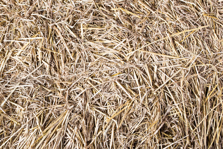 Dry straw macro shot  Background or Texture