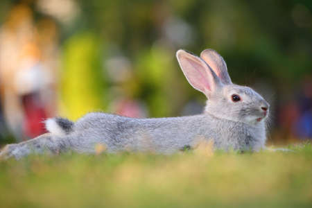 cute rabbit relaxing photo