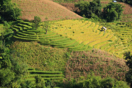 nice rice terrace in north Thailand.  photo