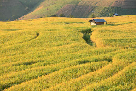 terraced: little hut in shade with rice paddy, Thailand  Stock Photo