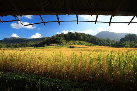paddy: view from window to rice paddy, Thailand.
