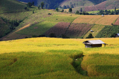 terrace of Rice field with little hut photo