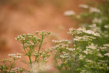 white flowers background Stock Photo - 12747577