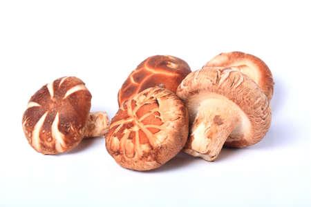 shiitake: Shitake mushrooms  Lentinula edodes  isolated