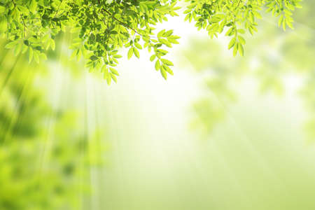 green leaf frame background photo