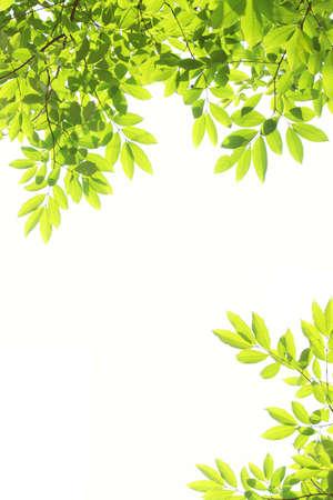leaf frame  photo