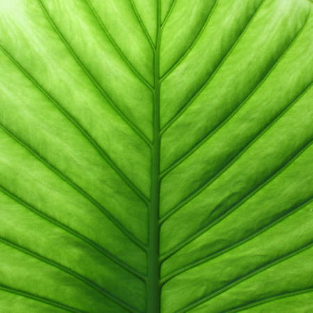 green leaf close up background  photo