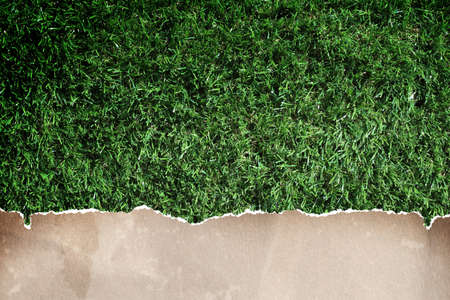 antiqued: recycled paper on grass. Stock Photo