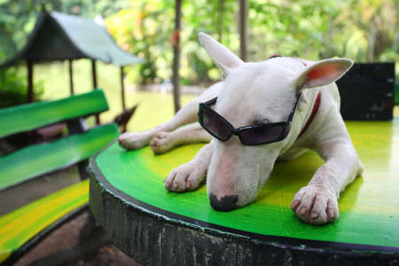 greem: funny dog relax in park