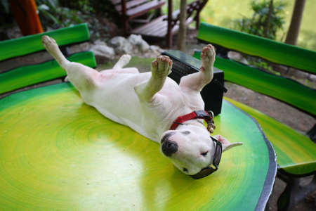 stay alert: funny dog relaxing