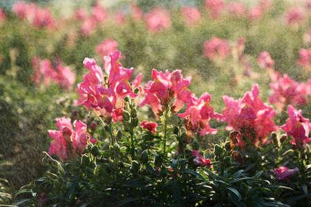 flowers in rain Stock Photo - 14344854