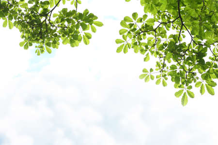 Tropical Green leaves on white cloud-sky background