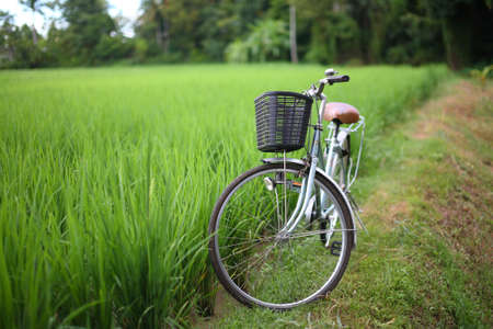 bicycle in rice paddy outdoor, asia -Thailand photo