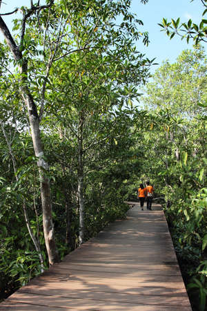 plateful: Wood path way in Mangrove forest, Krabi- Thailand  Stock Photo