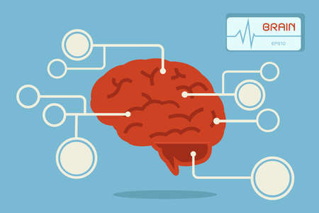 sistema nervioso central: infograf�a del cerebro