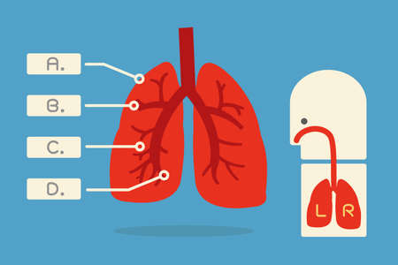lung infographic minimal design  vector Stock Vector - 20980882