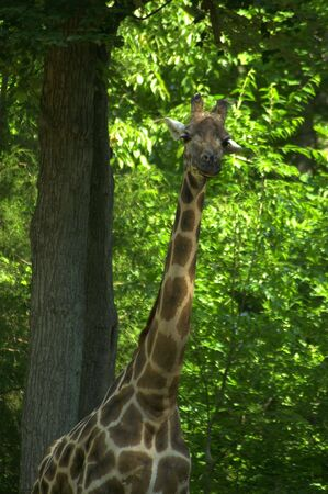 North Carolina zoo Stock Photo