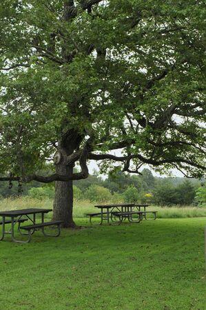 A picnic area