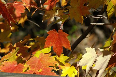 A shot of the changing leaves Stock Photo