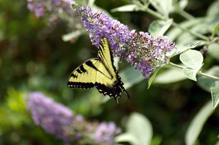 A shot of a butterly feeding Stock Photo - 608404