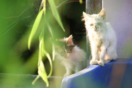 sun drenched: Kittens in BeiHai park, Beijing, China