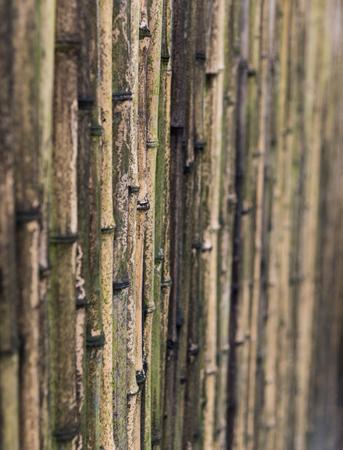 대나무 울타리 스톡 콘텐츠
