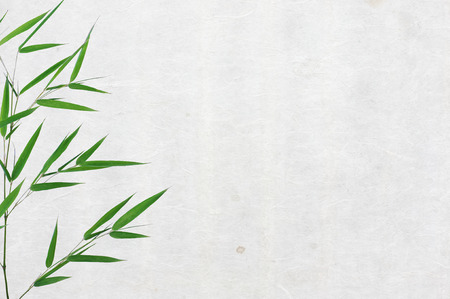 caligraphy: bamboo leaves on old rice paper texture background horizontal