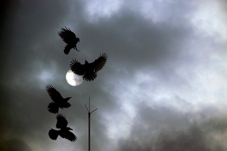 squabble: four crows squabbling over a lighting rod perch against a dark cloudy night sky background Stock Photo