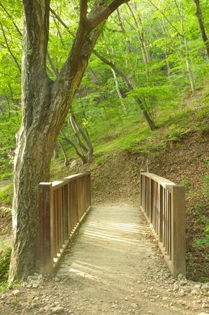 sunlit wooden bridge in forest