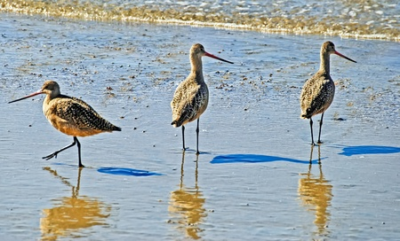 Three Sea Birds by the Sea Shore in Golden Afternoon Light photo