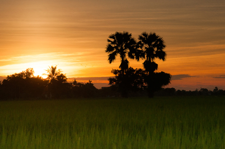 Sunset with sugar palm silhouette image