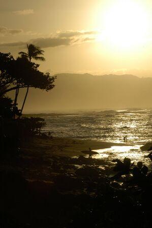 Surfer di ritorno dal surf al tramonto si staglia da palme tropicali, nelle Hawaii.