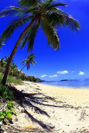 Tropical Island con Blue Sky vuoto lungo una spiaggia nelle isole Figi.