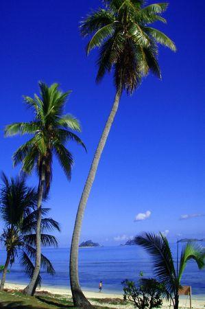 Long raggiungere palme circondato da bellissimi ambiente tropicale con soggetti passeggiando lungo le acque di bordo. Archivio Fotografico