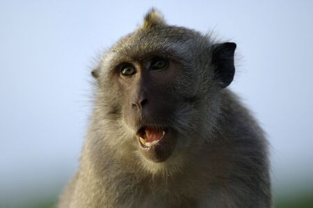 Monkey sitting on the temple high above the Bali Cliffs.                              Stock Photo