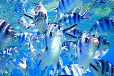 Gruppo di pesci attaccare la loro riflessione sulla cupola del porto la mia macchina fotografica nelle isole Figi.